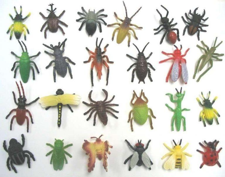 معلومات للاطفال عن الحشرات