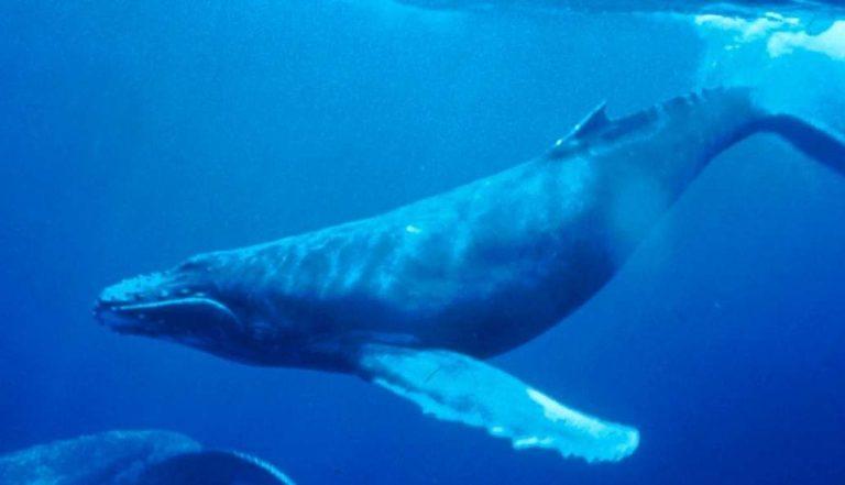 معلومات للاطفال عن الحوت