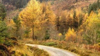 Photo of معلومات للاطفال عن فصل الخريف .. تعرف على سر تحول لون أوراق الشجر إلى اللون البني