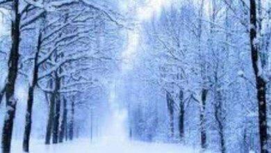 Photo of كلمات حب في الشتاء