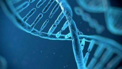 Photo of ماهو الحمض النووي .. معلومات عن الحمض النووى ..