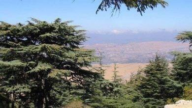 Photo of معلومات عن شجرة الأرز.. تعرف علي أهم المعلومات عن شجرة الأرز رمز لبنان