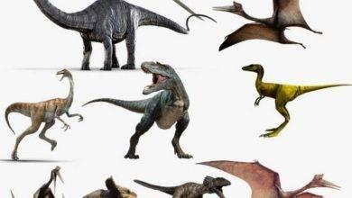 Photo of معلومات للأطفال عن الديناصورات… 22 معلومة مبسطة للأطفال عن الديناصورات
