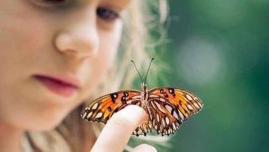 Photo of معلومات للاطفال عن الفراشة..حقائق و معلومات شيقة عن الفراشة لطفلك