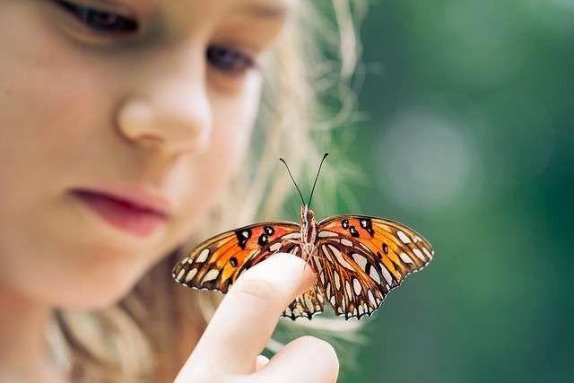 معلومات للاطفال عن الفراشة