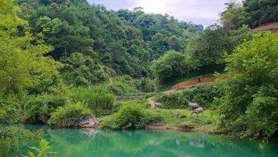 Photo of الحياة الريفية في فيتنام