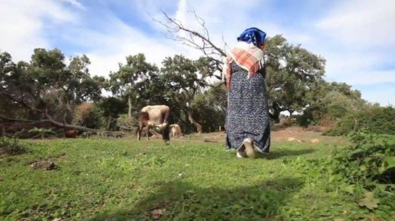 مكانة المرأه في الريف التونسي