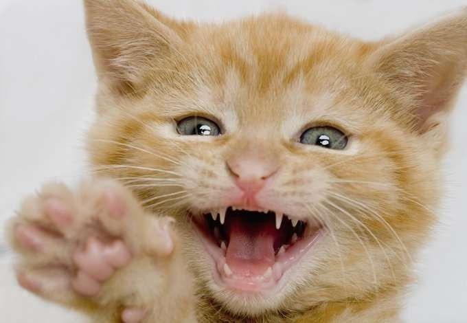معلومات للاطفال عن القطط