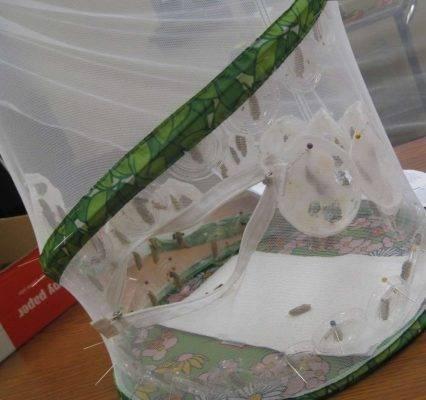 الأدوات اللّازمة لتربية الفراشات