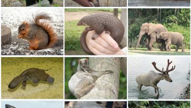 Photo of معلومات للاطفال عن الثدييات…خفايا ومعلومات عن الثدييات مهمة للطفل