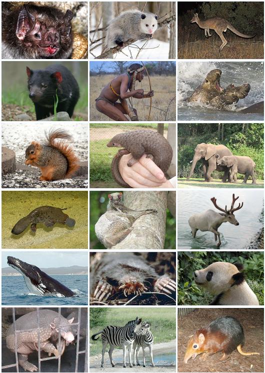معلومات للاطفال عن الثدييات