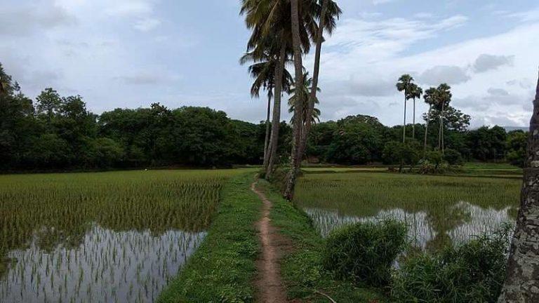 الحياة الريفية في الهند