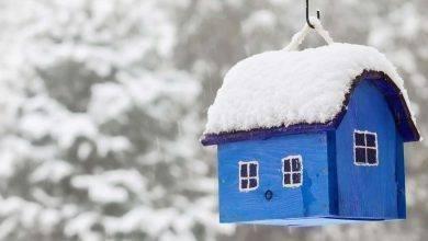 Photo of طريقة تدفئة العصافير في الشتاء .. وماذا تفعل لو أصيبت بالبرد