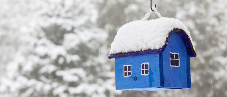 طريقة تدفئة العصافير في الشتاء