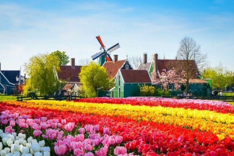 اشهر منتجات هولندا