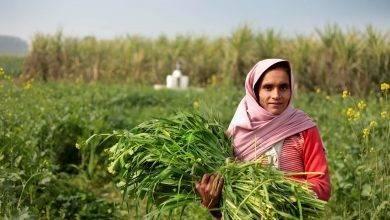 Photo of الحياة الريفية في تونس…أهم مظاهر الحياة داخل الريف التونسي