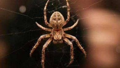 Photo of معلومات للاطفال عن العناكب .. تعرف على أبرز هذه المعلومات خلال المقال