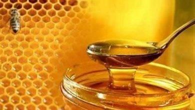Photo of معلومات للاطفال عن العسل .. تعرف معنا على أهم المعلومات حول العسل