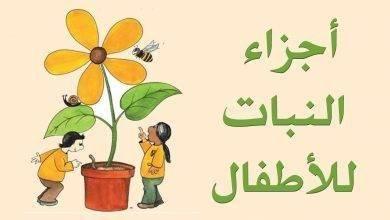 Photo of قصص عن اجزاء النبات للأطفال.. قصة أجزاء النبات وقصة نبات لا يُصدق