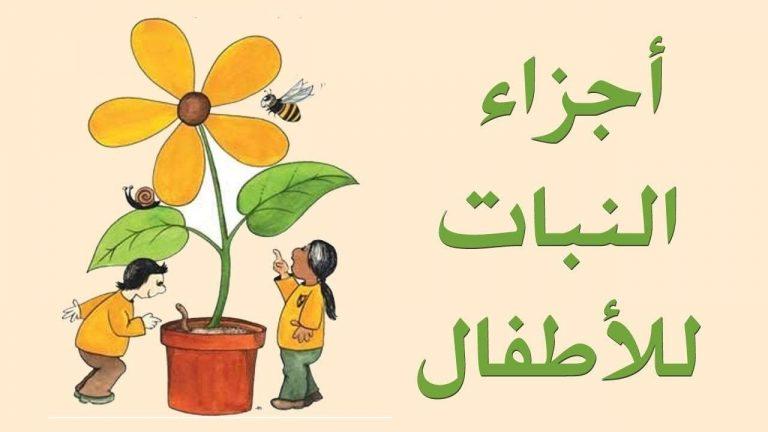 قصص عن اجزاء النبات للأطفال