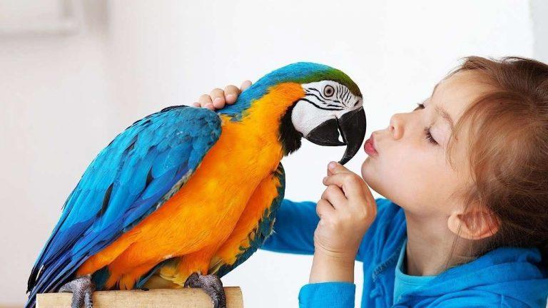 طريقة تربية العصافير في المنزل