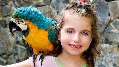 Photo of معلومات للأطفال عن العصفور