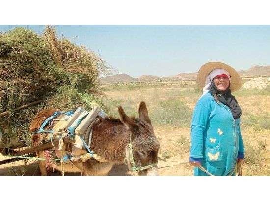 الحياة الريفية في تونس_تعريف الريف التونسي