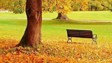 Photo of مميزات فصل الخريف .. أشياء مميزة تجعل فصل الخريف من أفضل فصول العام