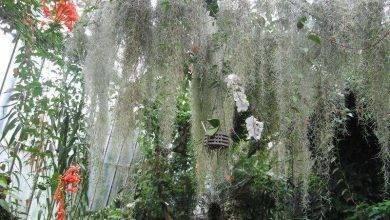 Photo of معلومات عن نبات الحزازيات