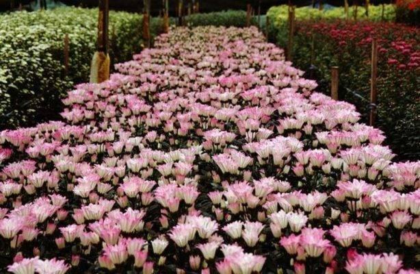 إليك معلومات عن حديقة الزهور في كوالالمبور