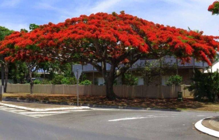 استخدامات وفوائد الشجرة
