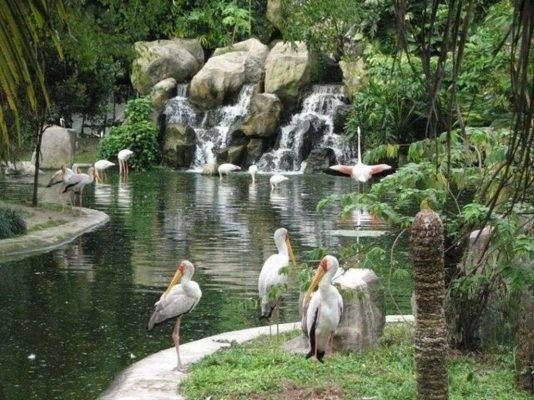 الأنشطة في حديقة طيور كوالالمبور