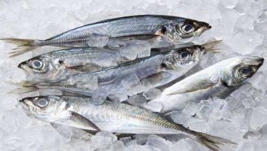 Photo of طريقة حفظ السمك .. تعرف علىطرق تخزين الأسماك الطازجة في المنزل