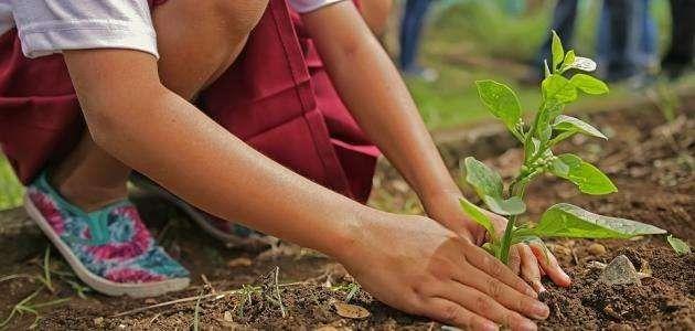 افكار لليوم العالمي للشجرة
