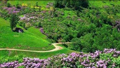 Photo of حديقة الزهور في طرابزون… تعرف على معلومات عن حديقة الزهور بمدينة طرابزون