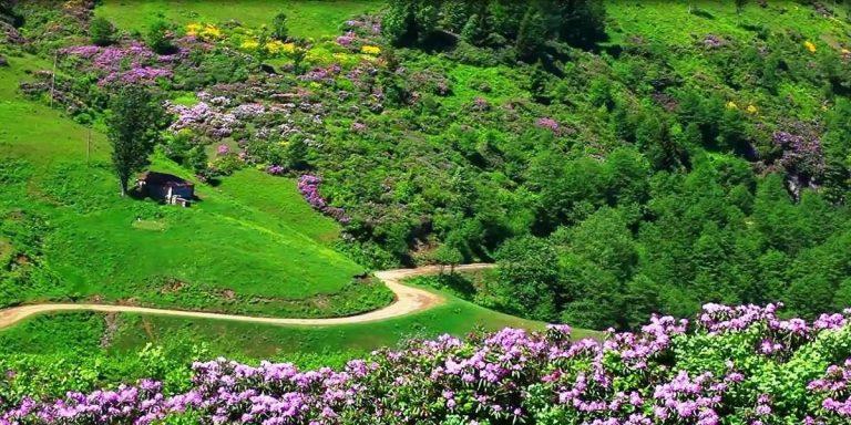 حديقة الزهور في طرابزون