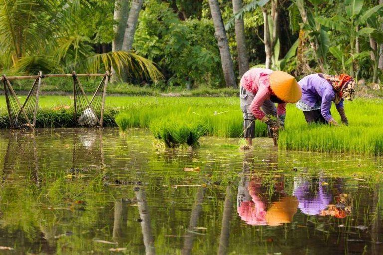 خصائص الحياة الريفية في إندونيسيا