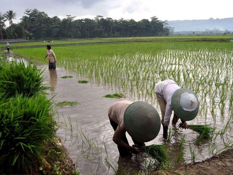 الحياة الريفية في إندونيسيا