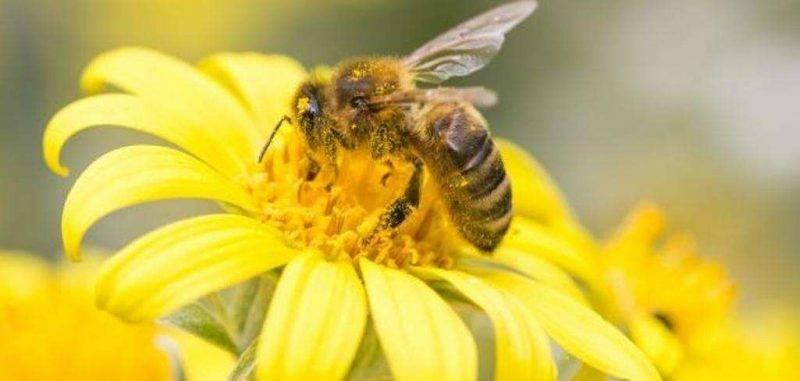 هل تعلم عن النحل ؟