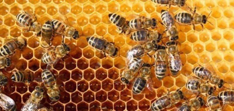 هل تعلم عن فوائد عسل النحل ؟