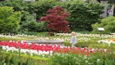 Photo of الحديقة النباتية الملكية مدريد .. تعرف على كل ما يخص الحديقة النباتية الملكية مدريد
