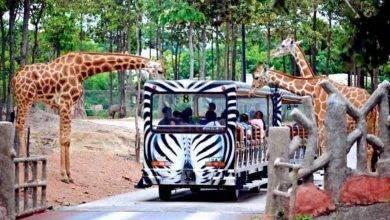 Photo of حديقة حيوانات سفاري ماليزيا .. إليك قائمة بحدائق السفاري في ماليزيا