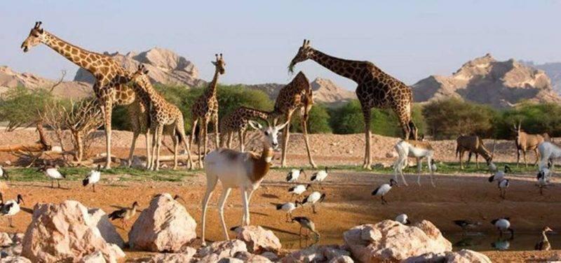 حديقة حيوان العين - أماكن ترفيهية في العين
