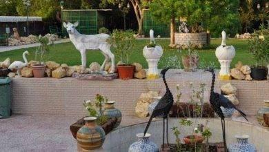 Photo of حديقة الحيوان في سلطنة عمان … تعرف معنا علي أجمل حدائق الحيوان في عمان