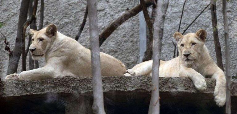 حديقة الحيوان في تبليسي