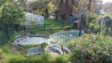 Photo of حديقة الحيوان في تونس العاصمة …. تعرف علي مواعيد الزيارة وسعر التذاكر بها