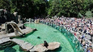 Photo of حديقة الحيوان في براغ … تعرف عليى انواع الحيوانات بها واسعار التذاكر