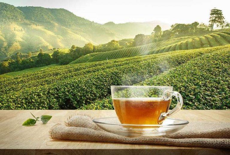 هل تعلم عن الشاي