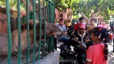 Photo of حديقة حيوان الإسكندرية … تعرف على واحدة من أقدم الحدائق في مصر
