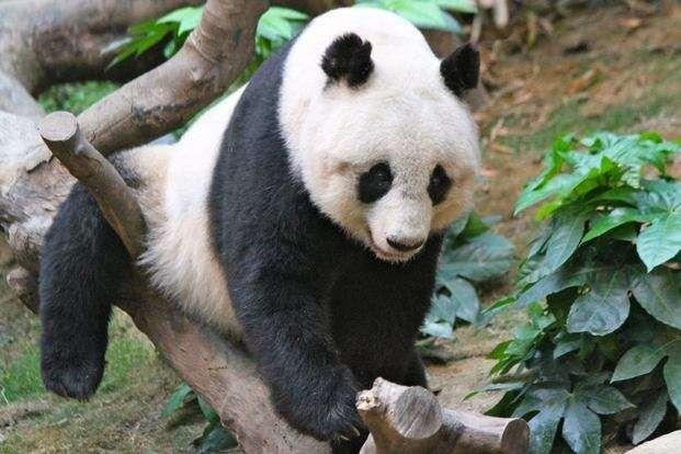 ما يميز حديقة الحيوان في كوانزو